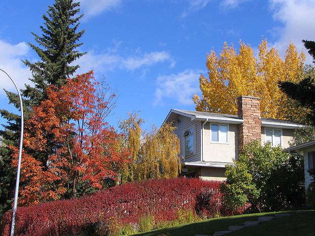 Dalhousie Calgary House Rental Rentals Neighbourhood
